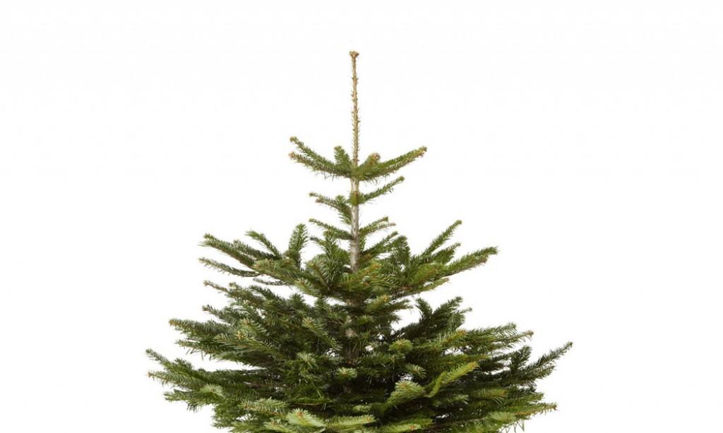 Günstige Weihnachtsbäume bei amazon ab 24,99 EUR